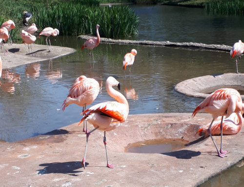 Be a Fuzzy Flamingo in a Flock of Pigeons